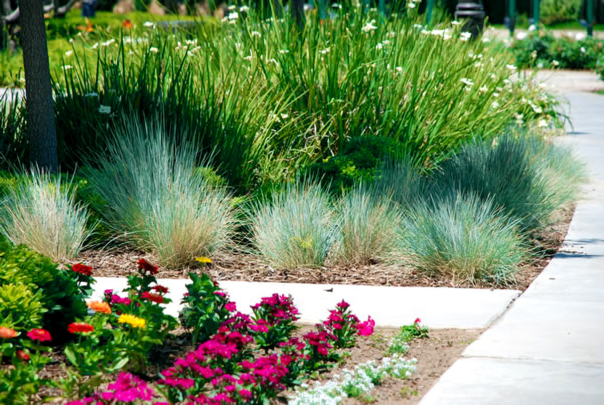 Central Cal Landscaping Service Landscape Maintenance and Care
